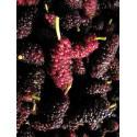 Cloe 120g confettura bio di mora di gelso frutto